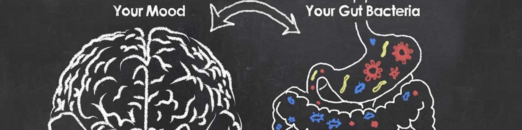Complex Connections Between the Gut and Brain Influence Mood, Behavior and More