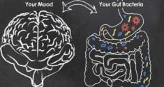 connections between the gut and brain influence mood behavior and more