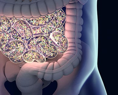 Gut Bacteria Found to Influence Diet, Reproductive Success and More