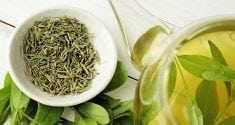 egcg from green tea may help combat negative effects of a western diet 3