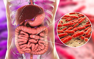 Gut Bacteria Influence Diabetes Risk 1