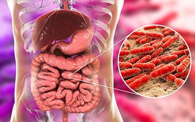 Gut Bacteria Influence Diabetes Risk 1
