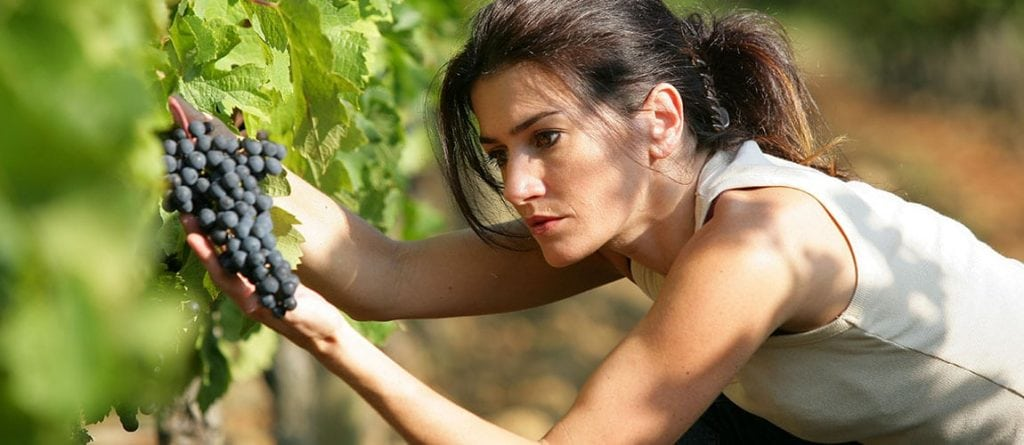 Resveratrol: Proven to Slow Brain and Muscle Aging 2