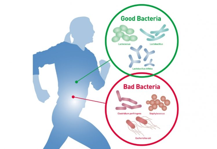 Exercise Affects Gut Bacteria, Regardless of Diet 2