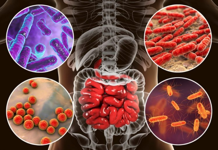 Manipulating the Human Microbiome to Protect Against Flu 2