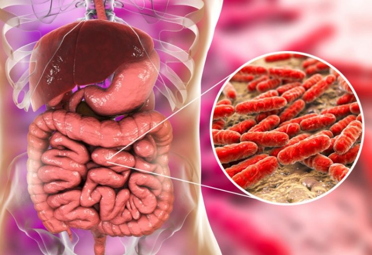 New Gut Bacteria Research Finds Link Between Gut Health, Stroke and Cancer 2