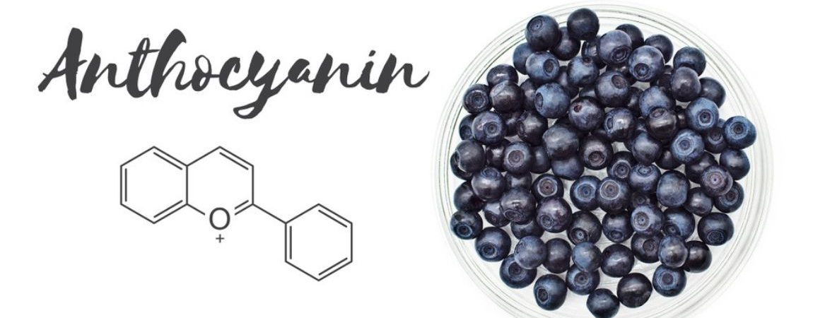 Can Anthocyanins in Blueberries Protect Heart Health and More?
