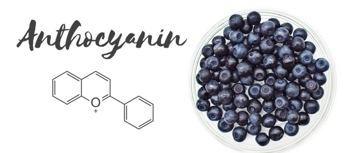 Can Anthocyanins in Blueberries Protect Heart Health and More? 3