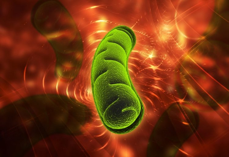 The Little-Known Link Between Mitochondria and Anxiety 1