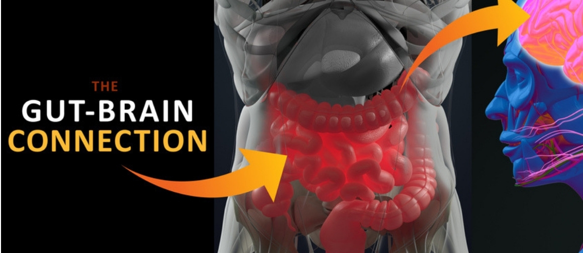 New Insights Into the Gut-Brain Connection