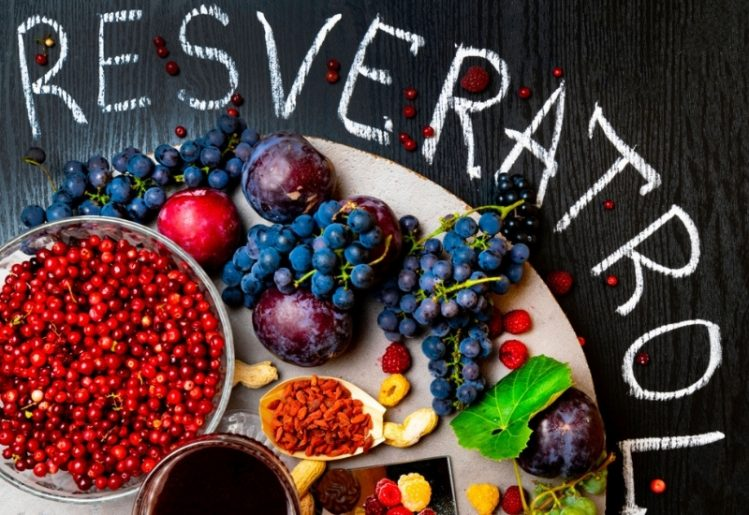 Resveratrol and Caloric Restriction: Can a Plant Compound Influence Lifespan? 1