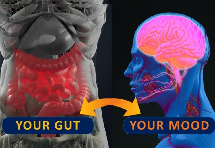 Research Update: Gut Microbes Influence Mood, Bone Strength and Cancer Risk 1