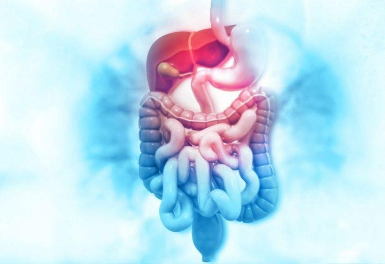 New Study Demonstrates How Prebiotics Help Regulate Circadian Rhythm